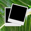 Photo frame on palm leaf — Lizenzfreies Foto