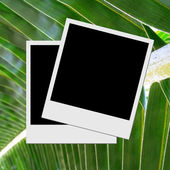 Photo frame on palm leaf — Stock Photo