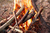 Bonfire in forest, camp — Stock Photo