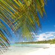 ストック写真: Palm on caribbesea, island Saona