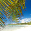 Stock Photo: Palm on caribbesea, island Saona