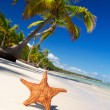 Starfish on caribbean beach — Stock Photo