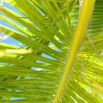 Palm leaf background — Stock Photo #4770709