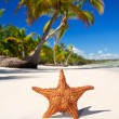 Starfish on white sand — Stock Photo #4771338