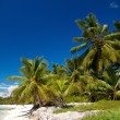 Palms on caribbean sea, Saona — Stock Photo #4772507