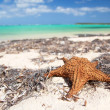 Starfish on tropical beach — Stock Photo #4772766
