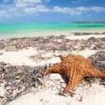 Starfish on tropical beach — Stock Photo