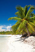 Palms on caribbean beach — Stock fotografie