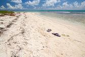Ciabatte nuoto sulla spiaggia sul Mar dei Caraibi, saona — Foto Stock