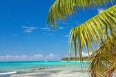 Palm leafs on caribbean sea — Stock Photo