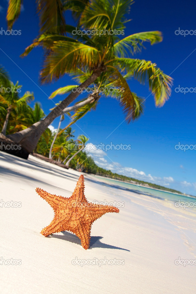 Starfish on caribbean beach with palm, Dominican Republic — Stock Photo #4770547