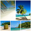 Caribbean beach collage — 图库照片