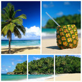 Caribbean sea collage — Stock Photo