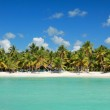 Palms on tropical coastline on caribbean sea — Stock Photo #4917512