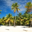 Palms on beach - Stockfoto