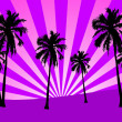 Palms on pink sunset — Stock Photo