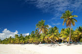 Palms on caribbean sea — Stock Photo