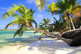 Tropical palms — Stockfoto