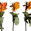 Faded roses set — Stock Photo