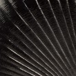 Black seashell background - Stock Photo