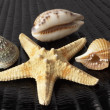 Starfish and seashells — Stock Photo #4147571
