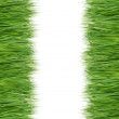 Stock Photo: Green and fresh grass