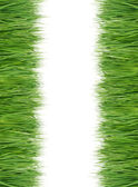 Green and fresh grass — Stock Photo