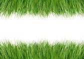 Hierba verde — Foto de Stock