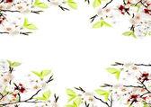 Spring — Zdjęcie stockowe