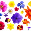 Set of flowers — Stock Photo