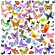 Stock Vector: Set of ladybug and butterfly