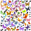 Stockvector : Set of ladybug and butterfly