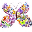 Royalty-Free Stock Imagen vectorial: Butterfly of butterflies