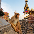 Stock Photo: Sitting monkey on swayambhunath stupin Kathmandu, Nepal