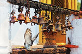 Many metal sacrificial bells hanging on chain and landing dove, — Stock Photo
