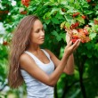 Stock Photo: Beautiful woman picking guelder rose berries