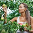 Beautiful woman picking the pear in the garden — Stock Photo #4388609