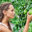 Beautiful woman picking the pear in the garden — Stock Photo