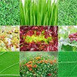 Collection of fresh green nature plant backgrounds - Stock Photo