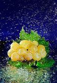 Grappolo d'uva bianca con verde foglie e fermato acqua moto — Foto Stock