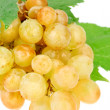 Bunch of white grapes with water drops isolated on white — Stock Photo