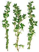 Fresh green thyme twigs, isolated — Stock Photo