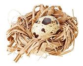 Jeden křepelčí vejce v hnízdě, sláma — Stock fotografie
