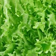 Fresh green lettuce leafs, food background — Stock Photo