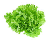 Fresh green lettuce leafs isolated on white background — Stock Photo