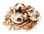 Some quail eggs in the straw nest — Stock Photo