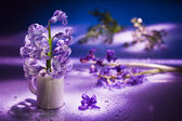 Still life with hyacinth flower in gentle violet colors and magi — Stock Photo