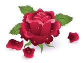 Rose mit tautropfen — Stockvektor