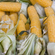 Corn for a background — Stock Photo
