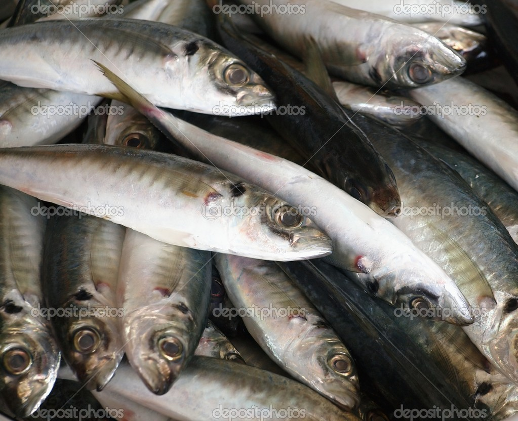 Fresh fish for sale stock photo shiyali 4955367 for Stock fish for sale